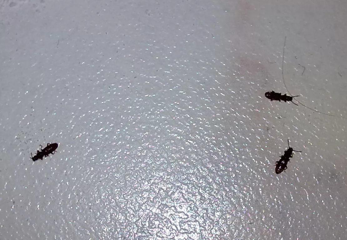 differents insectes dans la salle de