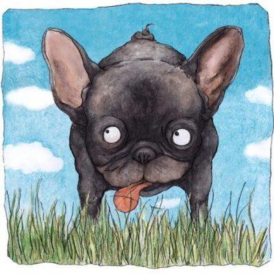 Berit, the Frenchy bulldoggy