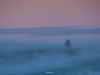 © Fabian Hüsser | Camera: Panasonic Lumix DMC-GX8 | Lens: | Settings f/8 | 1/50sec | ISO-250 |300mm | fabian.hüsser.ch