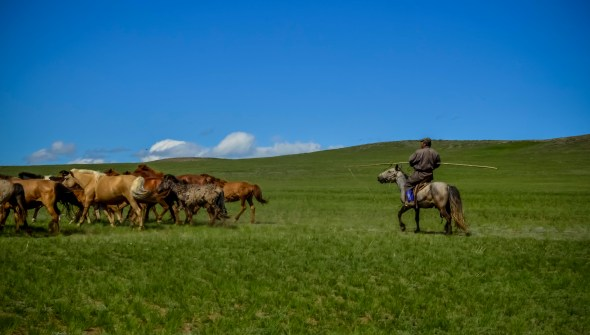 Steppe in Mongolia