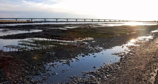 fazenda-marinha-de-ostras