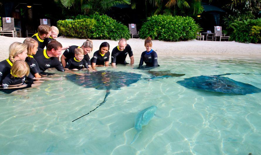 Em Orlando, com tubarões e arraias