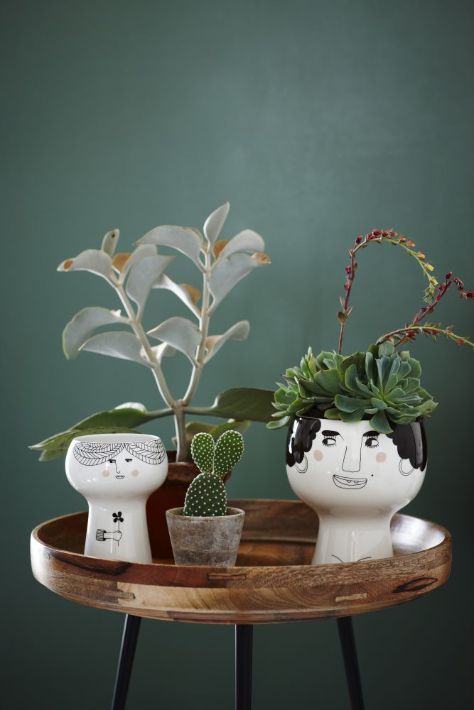 Vasinhos de plantas