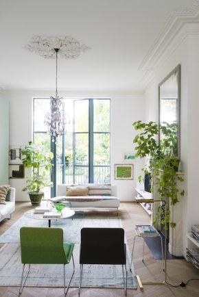 Lugar de plantas é dentro de casa 2