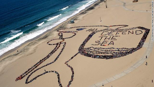 Defend The Ocean