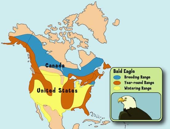 Bald Eagle's range