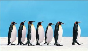 Leading penguins