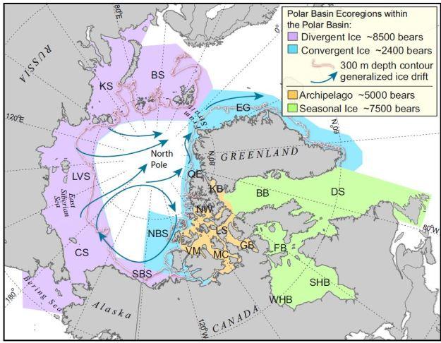 Polar bear ecosystems - From Amstrup 2010
