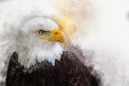 Bald Eagle head - dreamstime_133550595