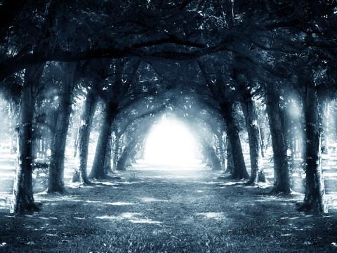 Path in dark forest.