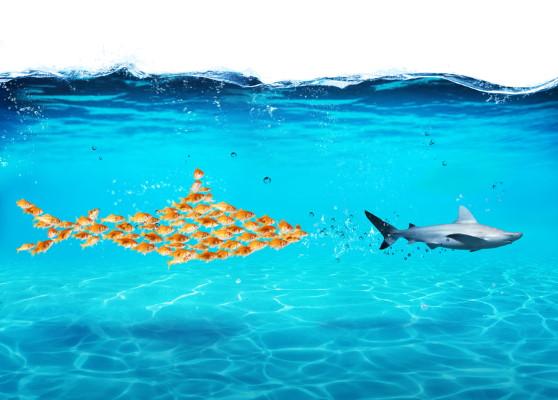 Sharks - Dreamstime-117839593