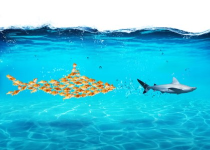 Sharks - Dreamstime-117839593