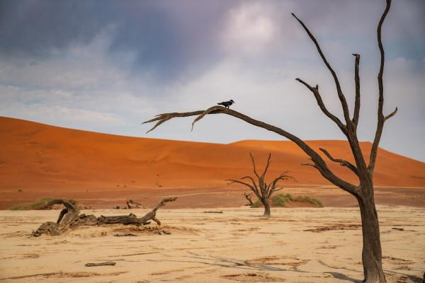 Dead desert landscape - AdobeStock - 246846880