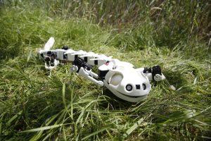 salamandre-robot-epfl