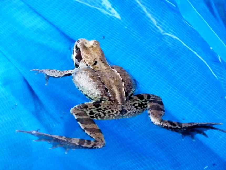 Unexpected visitor in paddling pool