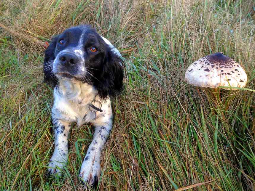 Mushrooms in Maresfield