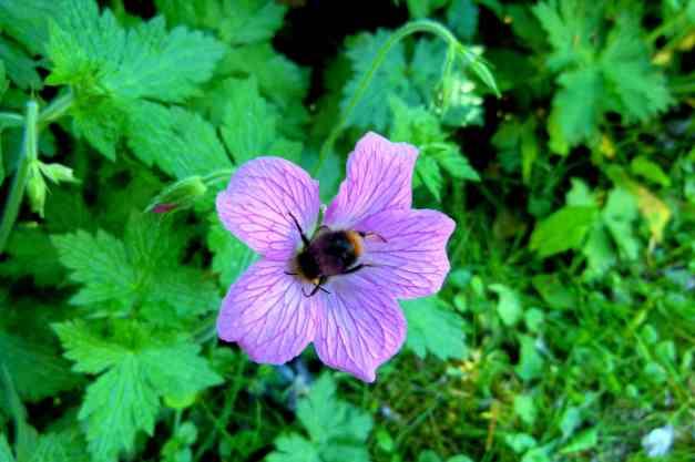 Photo: Bees like them too