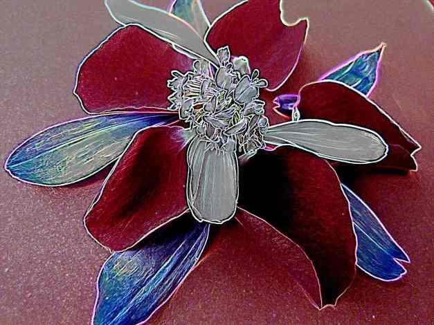 Petal arrangement outline colour 1 low res