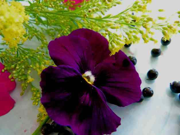 Pansy purple4 low res