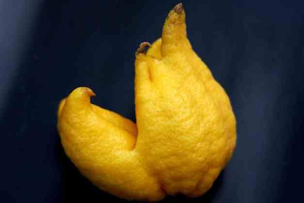 Lemon weird 1 low res