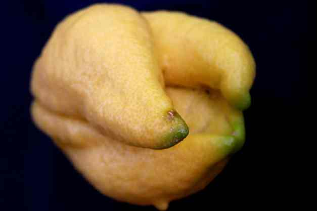 Lemon weird 3 low res