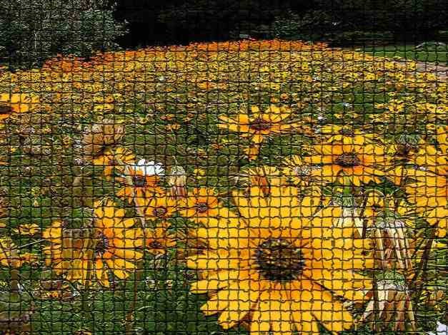 Namaqualand daisies mosaic low res