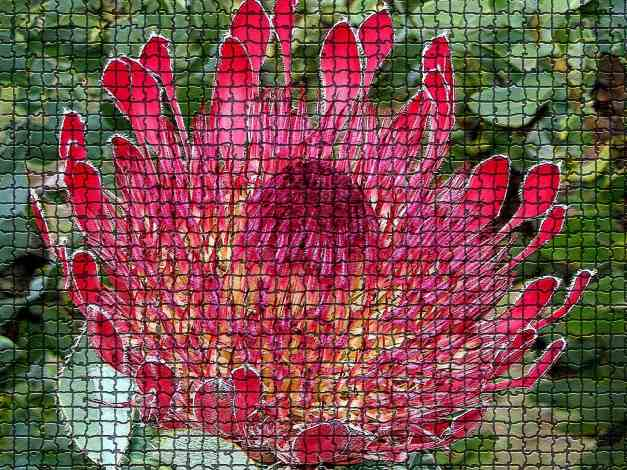 Protea mosaic low res