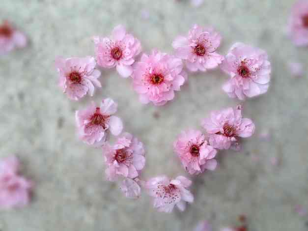 Blossom heart low res