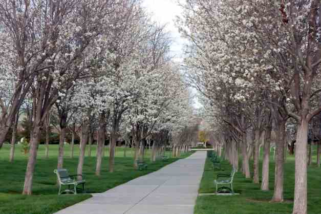 Blossom Avenue low res