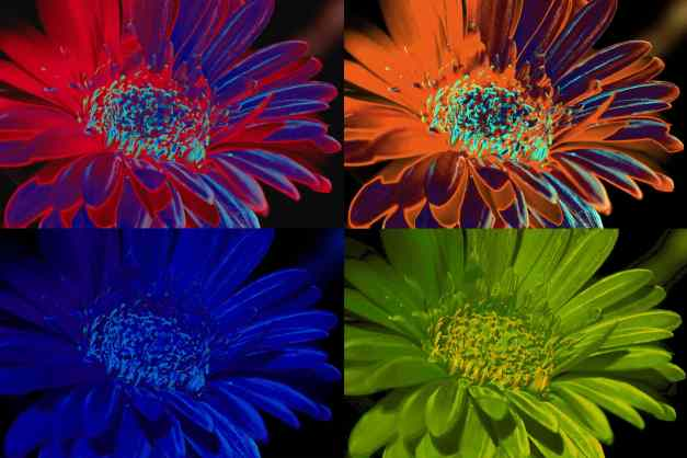 Gerbera pop art 2 low res1