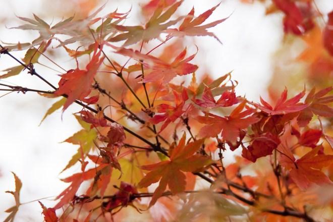 Fall leaves 5