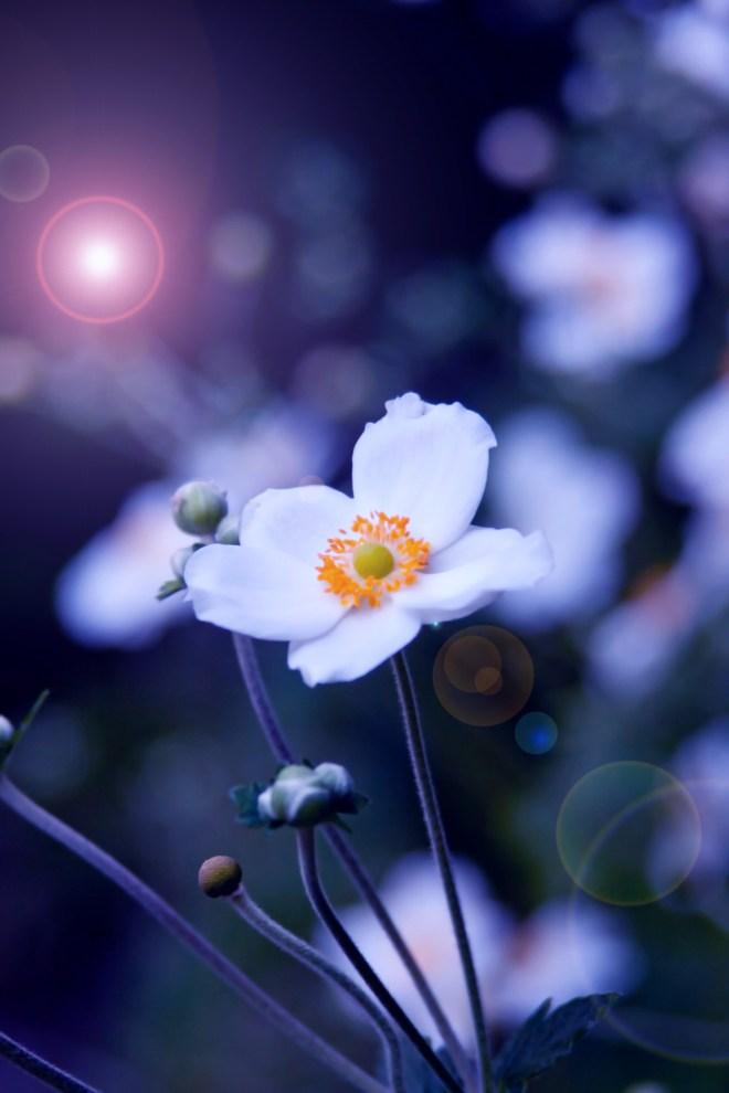Anemone stalks