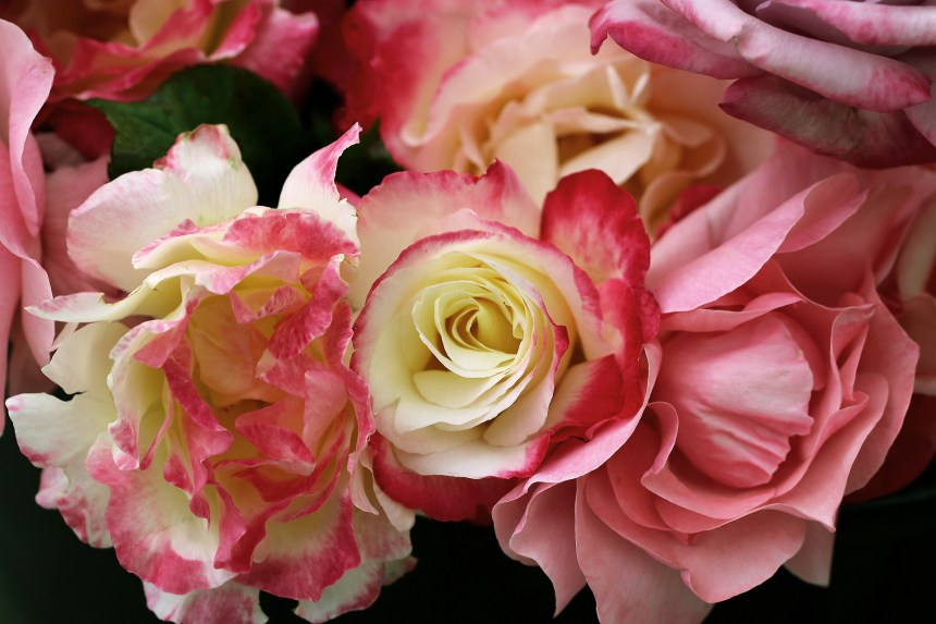 Bucket of Roses 3