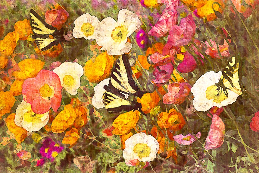 Butterflies in Poppies Watercolor