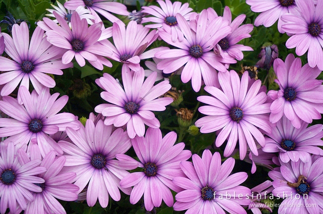 melbourne-flower-show-01
