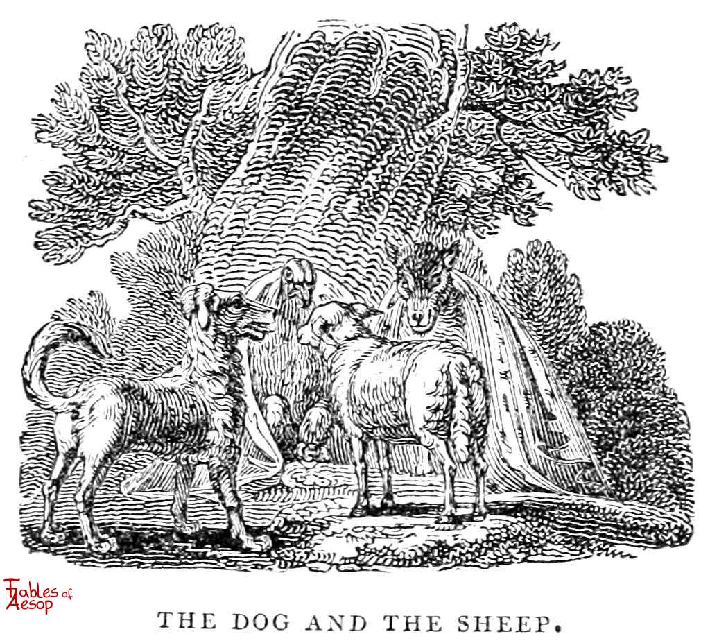 A Dog A Sheep And A Wolf