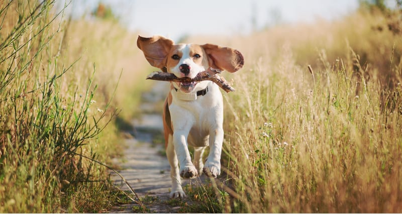 Best Dog Trackers and GPS Collars