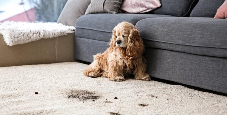 Best Dog Urine Neutralizers