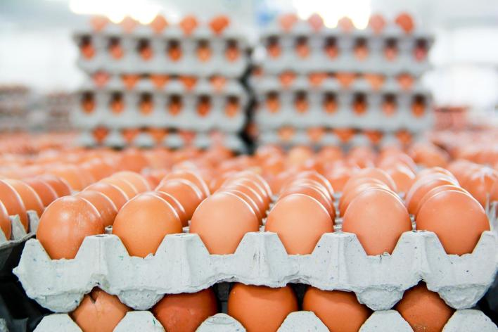 How to Start Eggs Supply Business with Little Capital