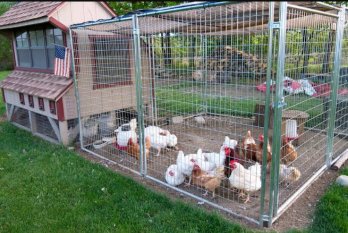 Poultry Housing: Comprehensive Guide for Building Suitable House for Poultry