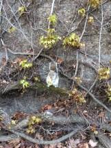 uno scoiattolo curioso