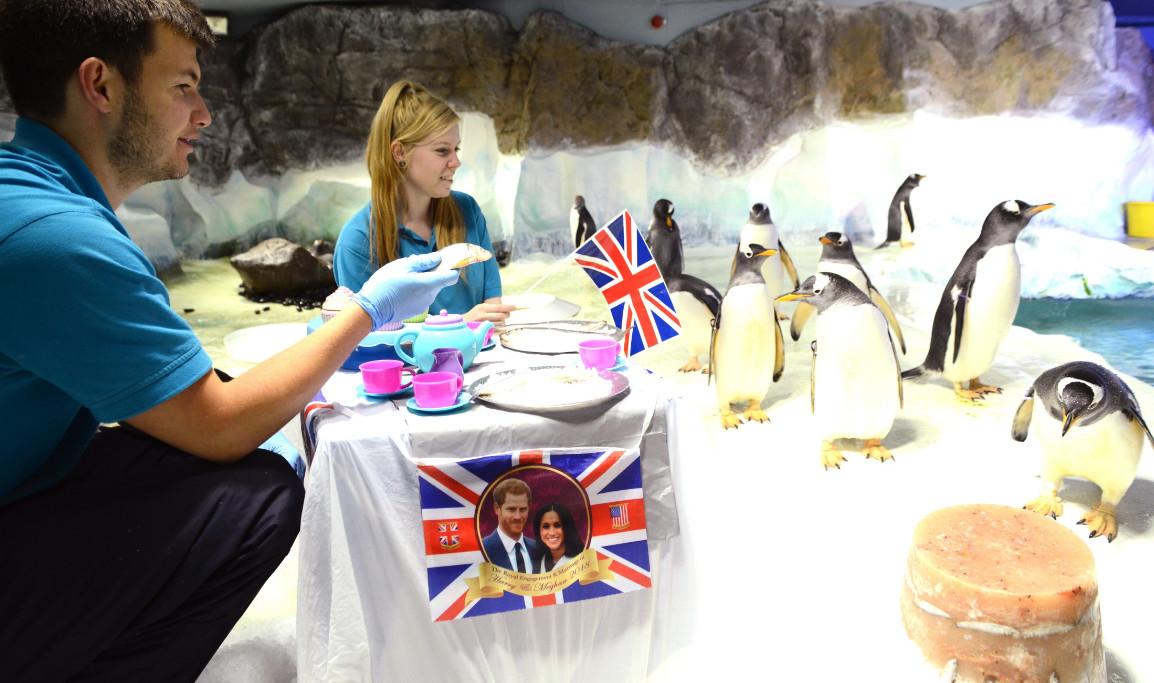 Penguins celebrating the royal wedding