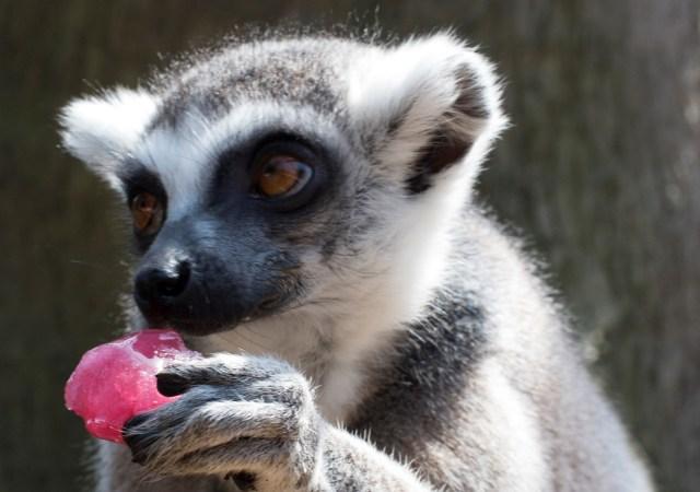 Drayton manor zoos animals