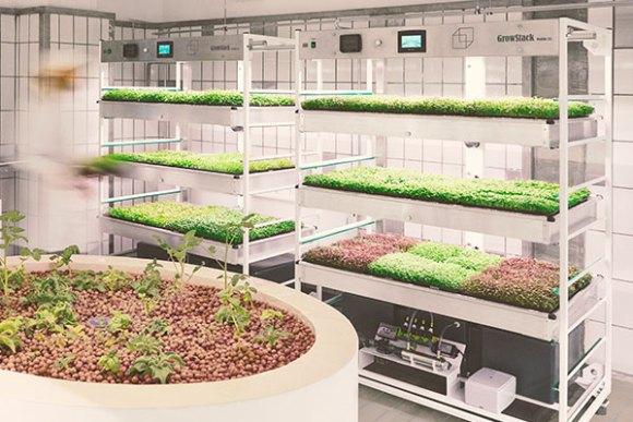 Explore hydroponic farming kits