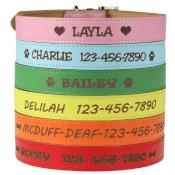 Amazon: Custom Catch Personalized Dog Collar $12.64 (Reg. $16.95) + Free...