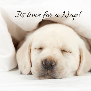 In Praise of the Afternoon Nap