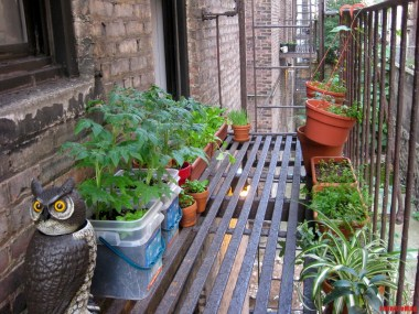 fire escape gardening