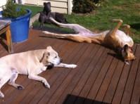 Roaching in the sun