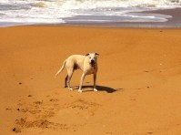 Rupie loved being a clown in the sand