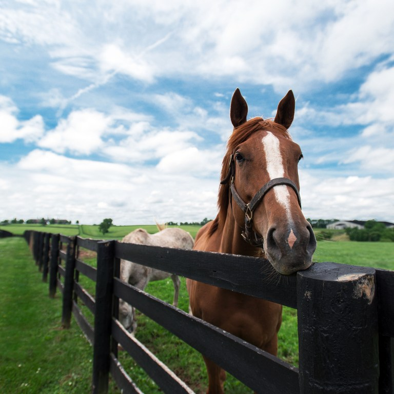 Brown horse standing behind a black fence with sunny skies